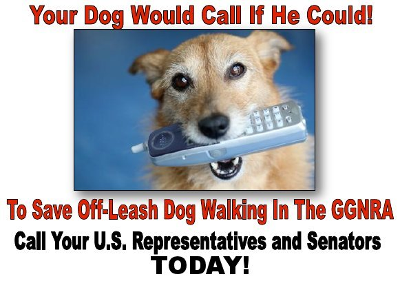 dogpacsf.org call in day to congress
